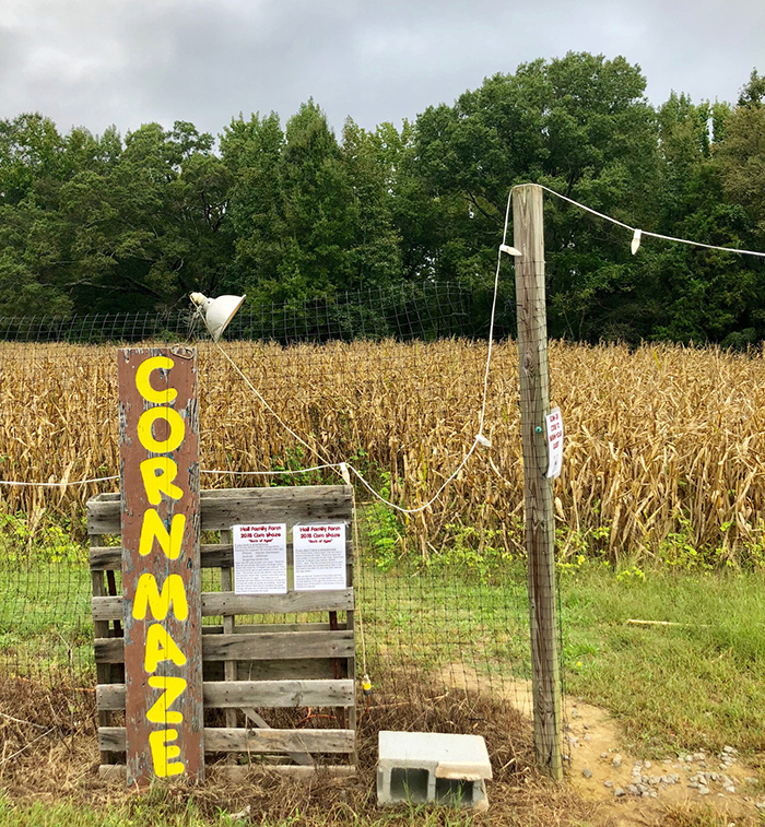 corn-maze-hall-family-farm-charlotte