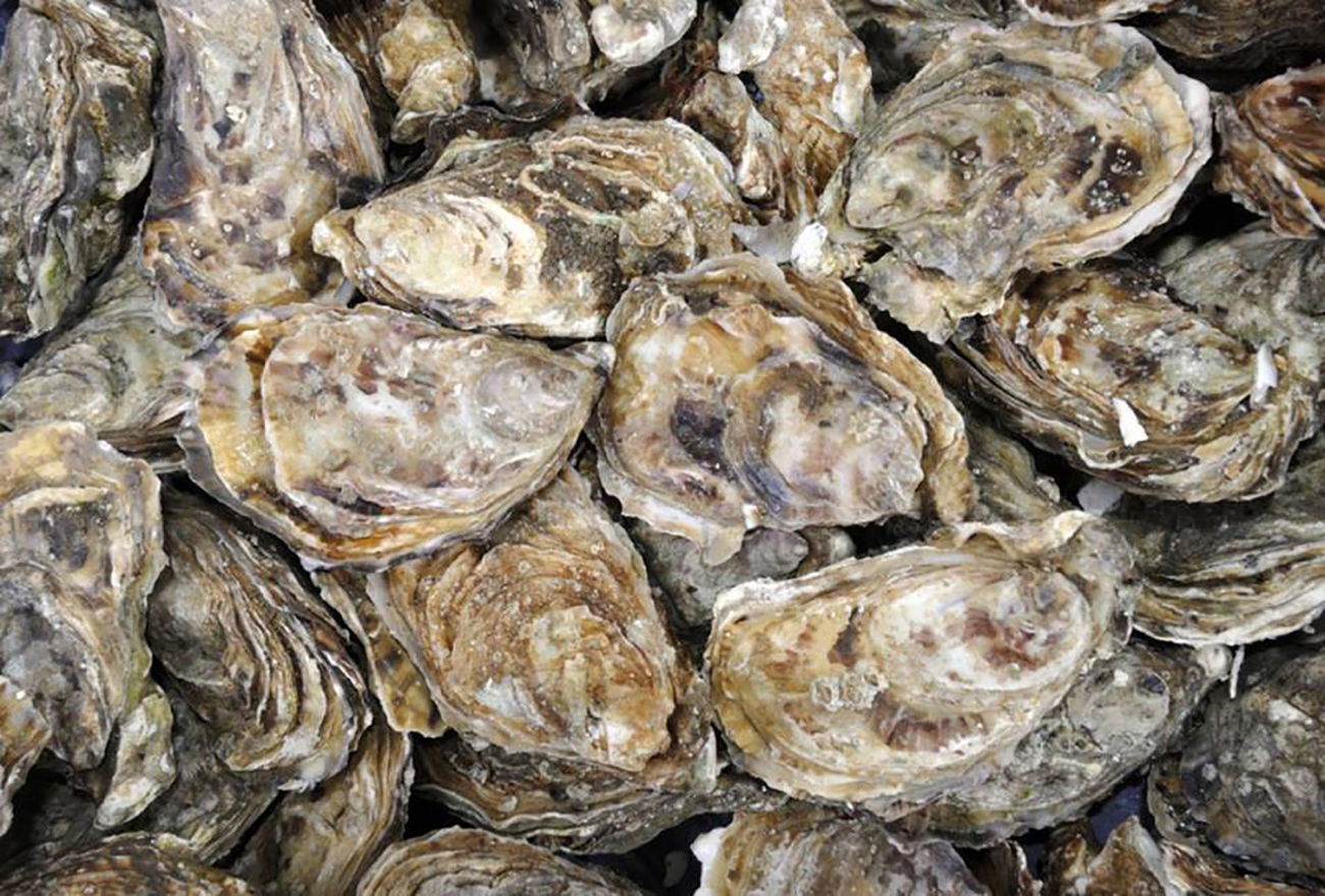Sycamore is teaming up with Sea Level for an all-you-can-eat oyster roast this Saturday
