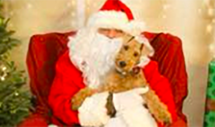 Get your fur baby a picture with Santa Paws at Lucky Dog Bark & Brew on December 16, all donations benefit Carolina Big Hearts Big Barks Rescue