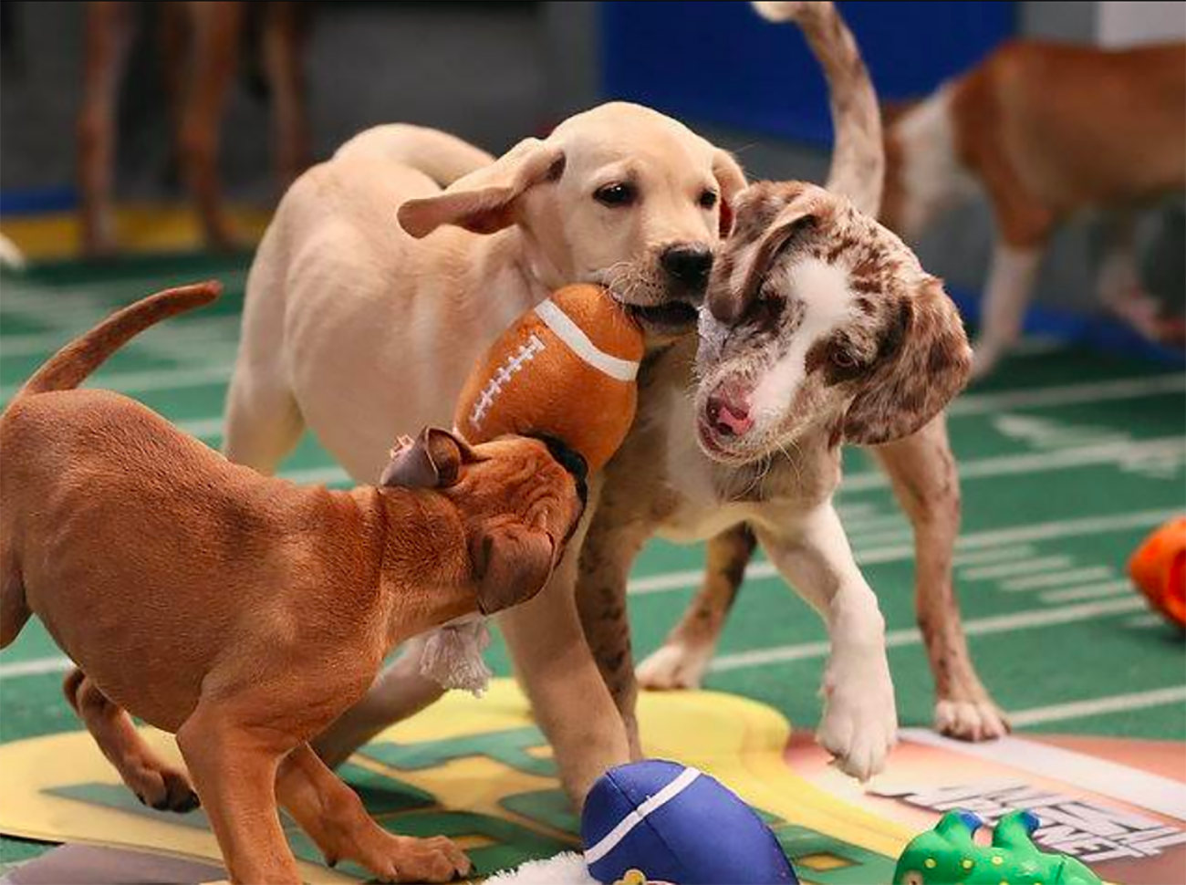 Agenda Weekender: 70+ things to do this weekend, including The Queen City Brewers Festival, multiple puppy bowls and 20 Super Bowl LII watch parties