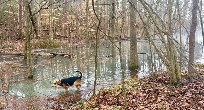 dog-badin-lake-charlotte
