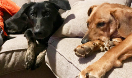 Going on vacation? Here are 7 pet sitters who will have...