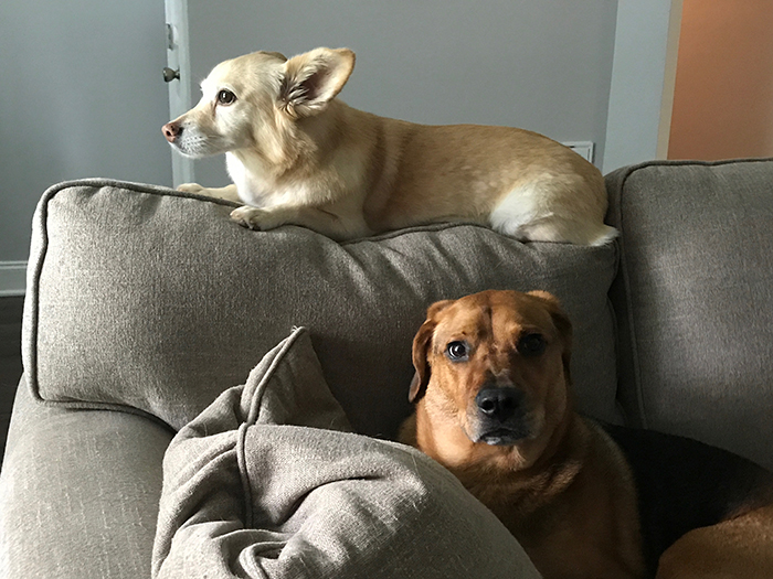 two-dogs-pet-sitting-charlotte