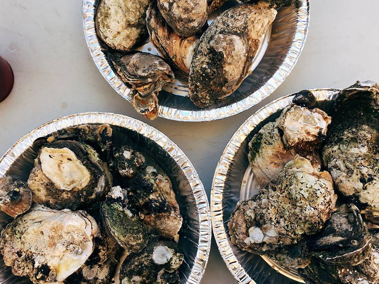 Agenda Weekender: 100+ things to do this weekend, including Sycamore's Spring Oyster Roast, the Moo & Brew Fest and multiple cornhole tournaments
