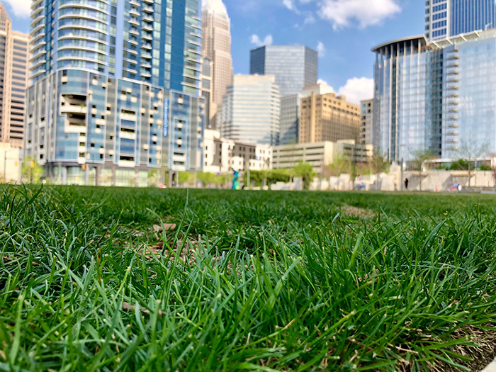 grass-allergies-in-charlotte-nc