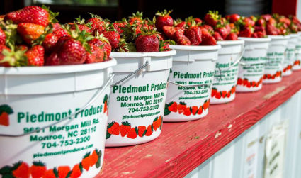 The complete guide to 11 pick-your-own strawberry patches in the Charlotte...