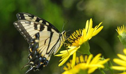Pollinators' Paradise at Daniel Stowe Botanical Garden