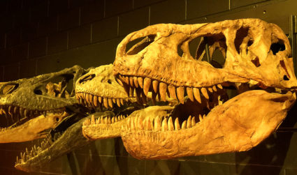 Discovery Place Science has a new dinosaur-focused exhibit perfectly timed to...