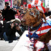 Agenda Weekender: 75+ things to do this weekend, including Sycamore's Red, White & Brew Fest, a patriotic dog fashion show and vigil for immigrant families