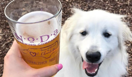 Pets, Pints, and Paints at NoDa Brewing