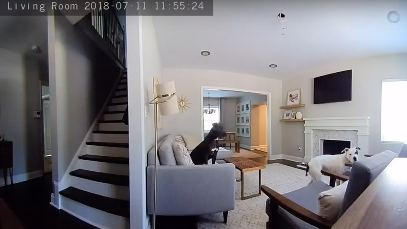 Life hack – We tested out CPI's new smart home camera and these are our fave features.