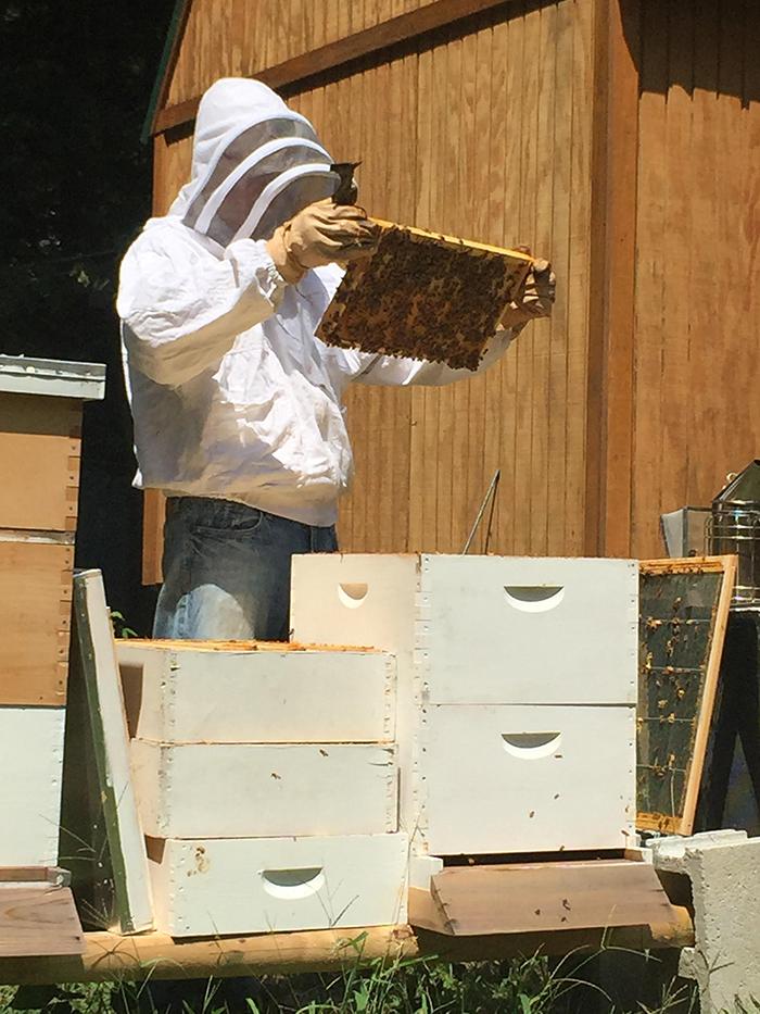 beekeeper-in-charlotte
