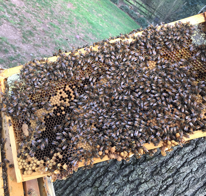 bees-backyard-honey-charlotte