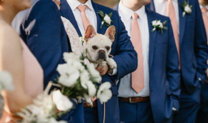 Want to have your dog in your wedding? I just did it and here's my quick advice