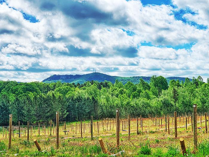 Veronét Vineyards & Winery crowders view