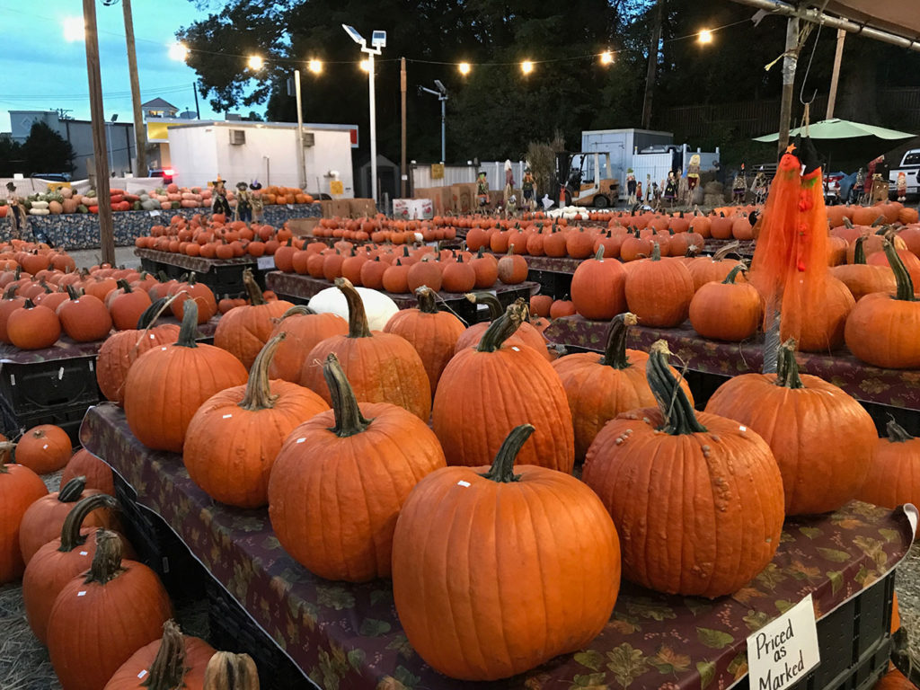 20 things to do for Halloween in Charlotte