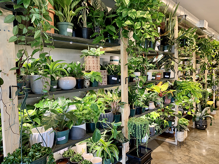 PlantBar potted plants