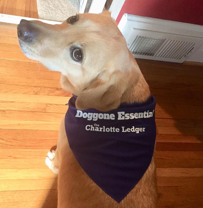 doggone-ledger