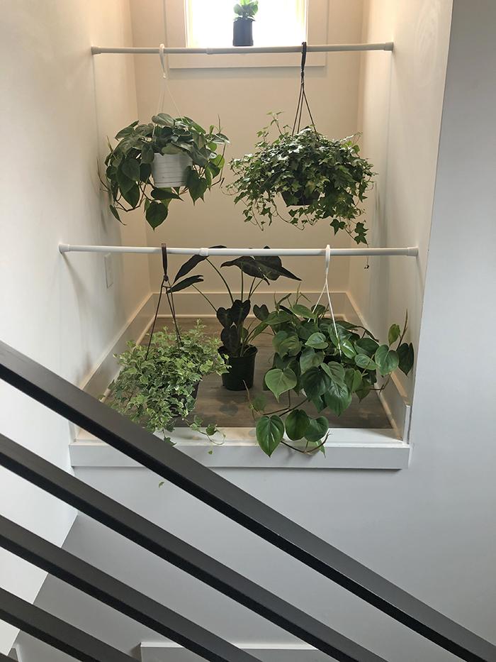 Corri Smith Home Tour plants