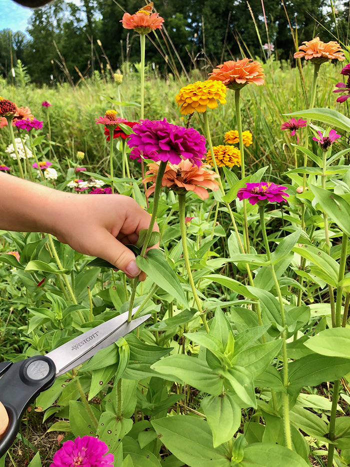 cutting flowers at mclawland farms charlotte