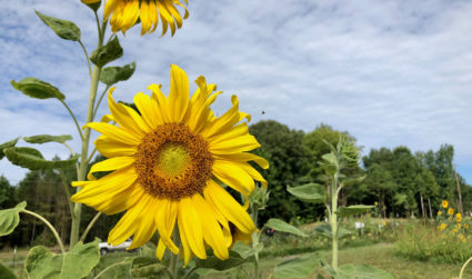 Urban farm offers $10 flower picking by reservation