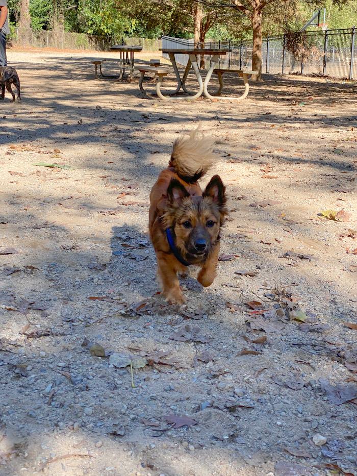 Frazier Park, Dog