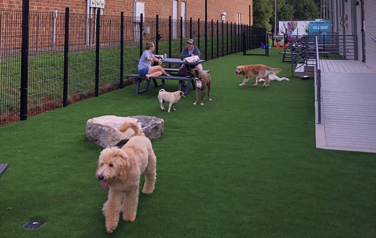 14 top doggy daycares in Charlotte